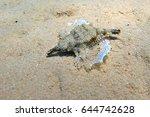 little dragonfish or short... | Shutterstock . vector #644742628