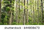 teak  tectona grandis  summer...   Shutterstock . vector #644808673
