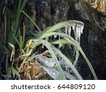Icy Grass At Chinese Garden ...