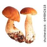 boletus edulis isolated on... | Shutterstock . vector #644842618