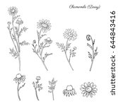 chamomile wild field flower... | Shutterstock .eps vector #644843416