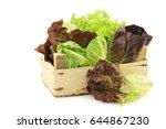 fresh romaine and red lettuce...   Shutterstock . vector #644867230
