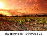 amazing vineyard sunset in... | Shutterstock . vector #644908528
