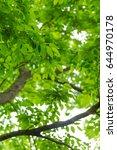 fresh green | Shutterstock . vector #644970178