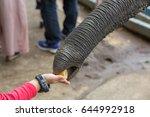 elephant feeding | Shutterstock . vector #644992918