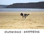 black and white springer... | Shutterstock . vector #644998546