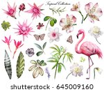 tropical collection with plants ... | Shutterstock . vector #645009160