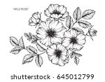 Stock vector wild rose flowers drawing and sketch with line art on white backgrounds 645012799