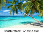 tropical paradise beach with... | Shutterstock . vector #645015550