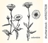 hand drawn illustration... | Shutterstock .eps vector #645027028