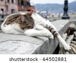Cat Sleeping Over A Wall In...