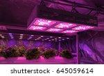 smart indoor farm and... | Shutterstock . vector #645059614