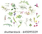 watercolor herbal set for card... | Shutterstock . vector #645095329