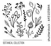 botanical collection with berry ... | Shutterstock .eps vector #645105844