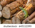 a lizard on a trunk | Shutterstock . vector #645112390