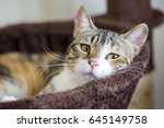 Stock photo cat 645149758