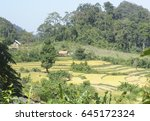 Small photo of landscape of forest edge