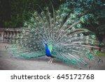 Beautiful Peacock. Male Peacoc...