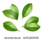 Citrus Leaves Isolated On Whit...
