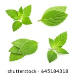mint leaves isolated. set | Shutterstock . vector #645184318
