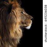 Lion's Profile Portrait View...