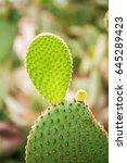 Cactus Family  Barrel Cactus ...