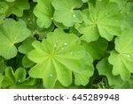 closeup nature view of green... | Shutterstock . vector #645289948