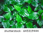 abstract green leaves pattern... | Shutterstock . vector #645319444