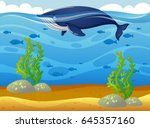 whale swimming in the sea... | Shutterstock .eps vector #645357160
