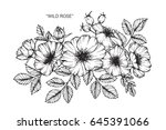 wild rose flowers drawing and... | Shutterstock .eps vector #645391066