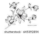 Stock vector magnolia flowers drawing and sketch with line art on white backgrounds 645392854