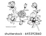 magnolia flowers drawing and... | Shutterstock .eps vector #645392860