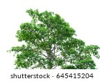 green leaves isolated on white... | Shutterstock . vector #645415204