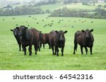 Group Of Farm Cattle With...