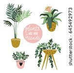 potted  house plants isolated... | Shutterstock .eps vector #645492973