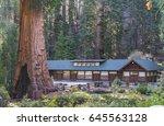 Sequoia National Park...