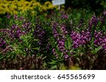 orchid | Shutterstock . vector #645565699