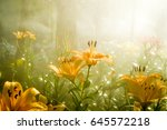 Morning Sun Light Rays And...