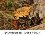 Poisonous Mushrooms Huddled...