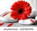 spa stones and gerbera on gray... | Shutterstock . vector #645584596