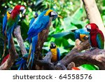 group of beautiful parrots in a ... | Shutterstock . vector #64558576