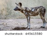 side profile of an african wild ... | Shutterstock . vector #645615580