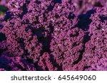Background Of Purple Decorativ...