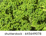 Background Of Green Decorative...