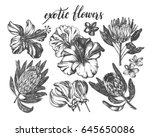 ink hand drawn set of tropical... | Shutterstock .eps vector #645650086