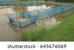 fish cage in fish farm   Shutterstock . vector #645676069