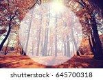 autumn park blurred background... | Shutterstock . vector #645700318