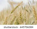 wheat field closeup  | Shutterstock . vector #645706384