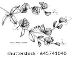 sweet peas flowers drawing and... | Shutterstock .eps vector #645741040
