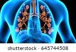 3d illustration human body... | Shutterstock . vector #645744508
